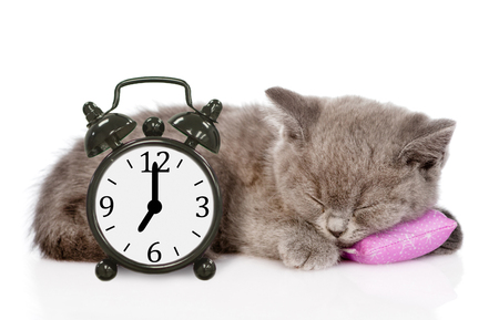 British shorthair kitten sleeping on pillow with clock. isolated on white background. Stock Photo