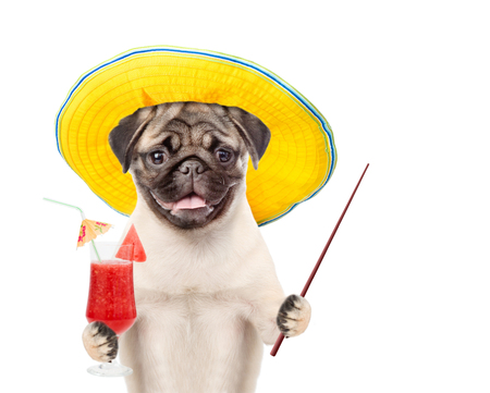 Funny dog in summer hat holds tropic watermelon cocktail and pointing stick. isolated on white background. Stock Photo