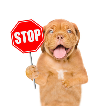 Dog holding stop sign. Isolated on white background. 스톡 콘텐츠