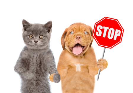 Cat and dog with the stop sign. Isolated on white background.