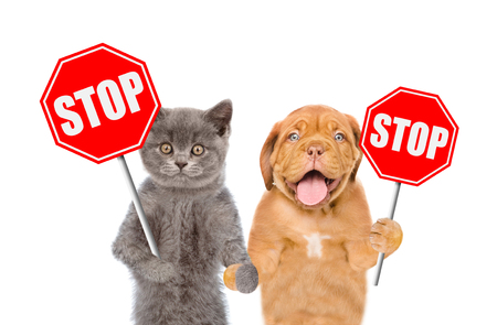 Cat and dog with the stop signs. Isolated on white background. Imagens