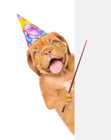 Funny dog in birthday hat holding pointing stick above white banner. isolated on white background.
