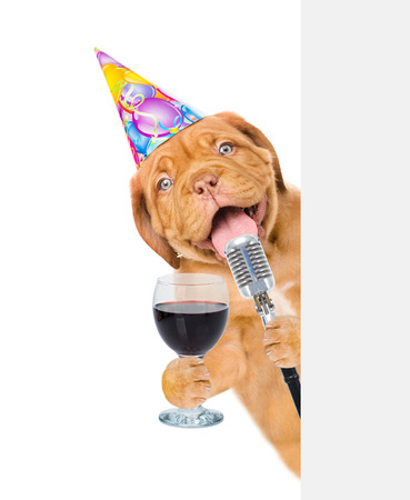 Dog in party hat holding retro microphone and wineglass above white banner. Isolated on white background. Stock Photo