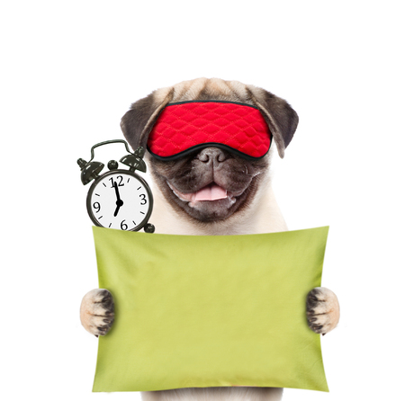 Funny puppy with eye mask and alarm clock holds pillow.  isolated on white background.