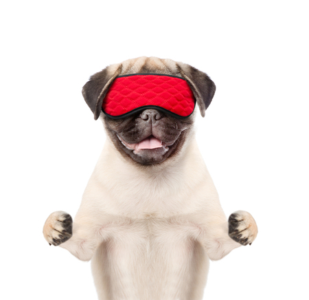 Funny sleeping dog with eye mask. isolated on white background.