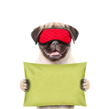 Funny puppy with eye mask holds pillow.  isolated on white background.