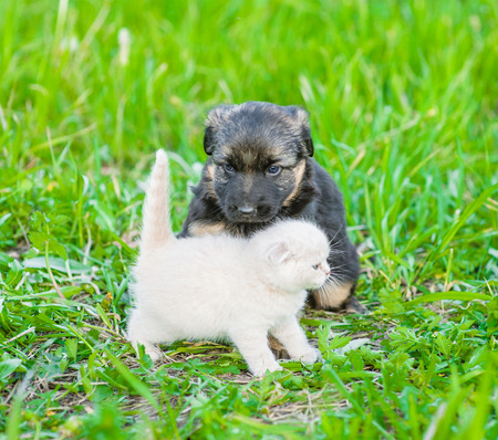 Puppy and kitten together on green summer grass.