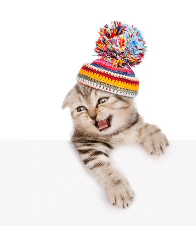 kitten in warm hat above white banner. isolated on white background. Stock Photo