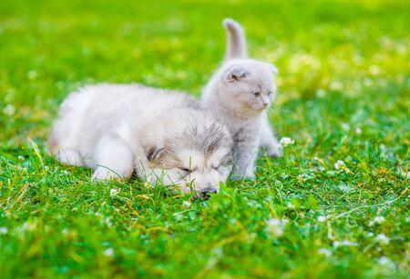 sleeping puppy and tiny kitten on summer green grass.