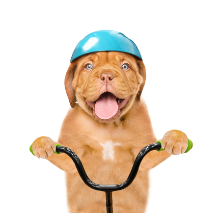 Funny puppy in protective helmet on bike. isolated on white background. Stockfoto