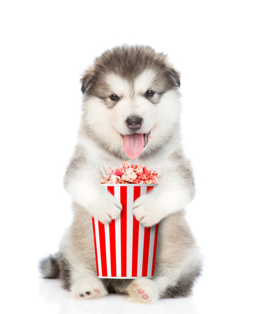 Funny puppy with popcorn basket. isolated on white background. Imagens