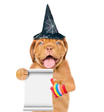 Perrito divertido con el sombrero para Halloween y la lista vacía que muestran los pulgares para arriba. aislado en fondo blanco. Foto de archivo