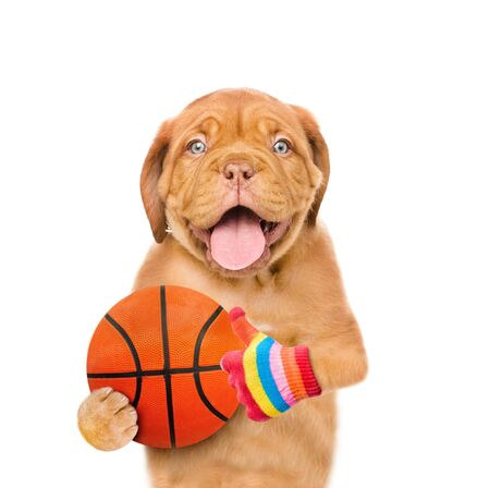 Funny puppy with basketball ball showing thumbs up. Isolated on white background.