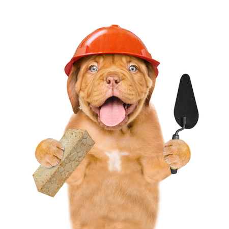 Funny puppy builder with a trowel and brick. Isolated on white background. Stock fotó