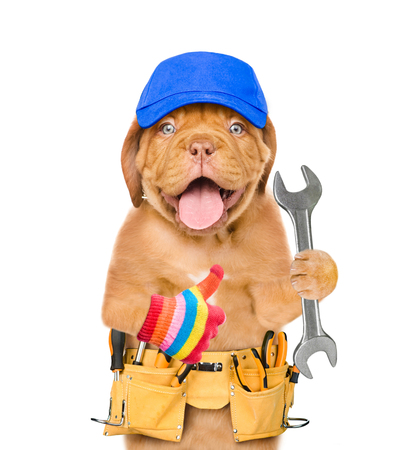 Funny dog worker in blue cap with tool belt and wrench showing thumbs up. Isolated on white background. Фото со стока