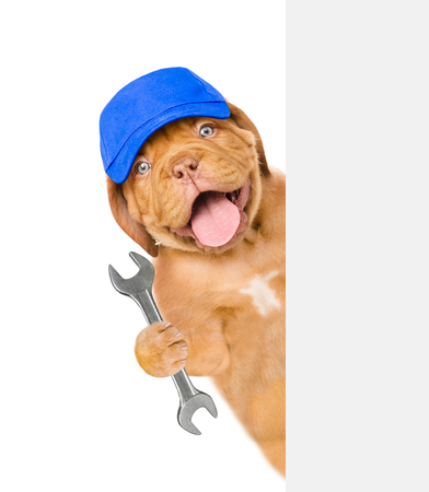 Funny puppy worker in blue cap with wrench behind white banner. Isolated on white background. Stock Photo