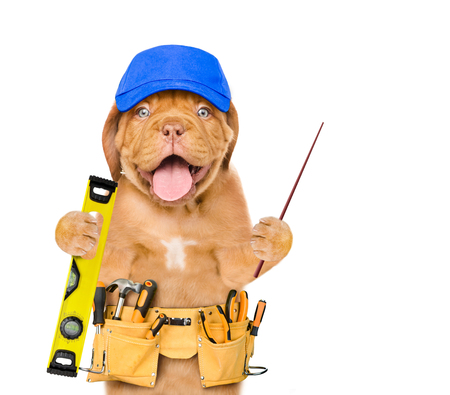 Funny dog worker in blue hat with tool belt pointing away. Space for text. Isolated on white background.