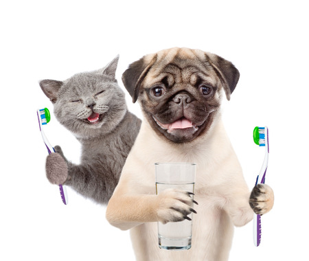 Cat and dog with  toothbrushes and a glass of water. isolated on white background.