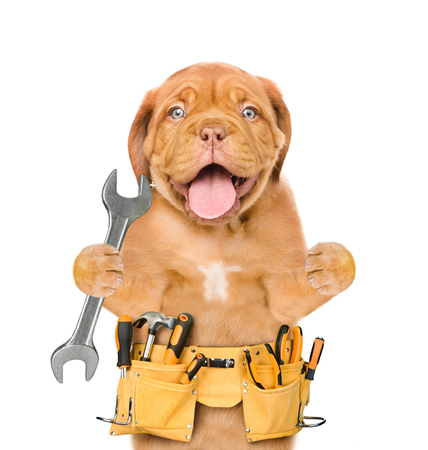 Funny dog worker with tool belt and wrench. Isolated on white background.