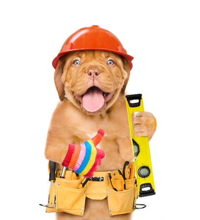 Funny dog worker  in hard hat  with tool belt and  spirit level showing thumbs up  Isolated on white background. Stock Photo