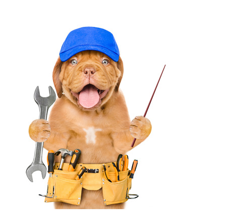 Funny dog worker in blue cap with tool belt and wrench pointing away. Isolated on white background. Фото со стока