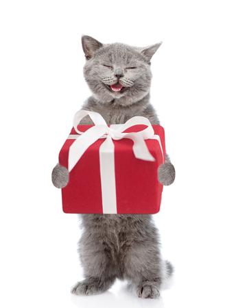 Gelukkig Schots kitten met geschenkdoos. geïsoleerd op witte achtergrond. Stockfoto