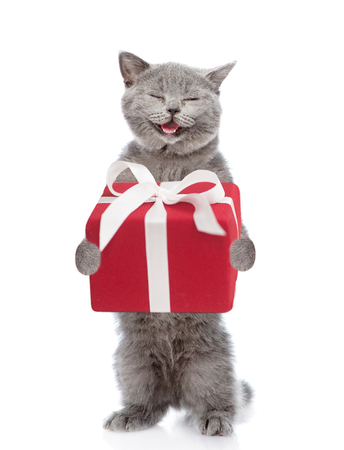 Happy Scottish kitten  with gift box. isolated on white background. Standard-Bild