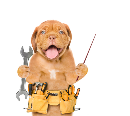Funny dog worker with tool belt and wrench pointing away. Isolated on white background.