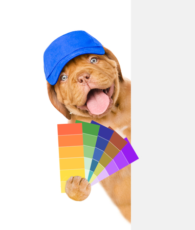 Funny puppy in blue hat with color samples. isolated on white background. Stock Photo