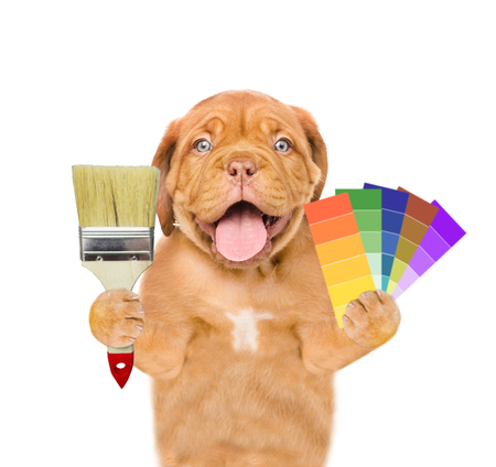 Funny puppy with color samples and paintbrush. Stock Photo
