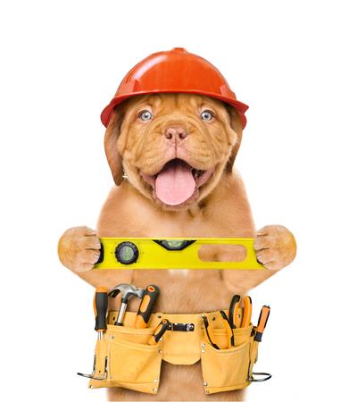 Robotnik pies złota rączka w kask z paskiem narzędziowym i poziomicą. Pojedynczo na białym tle.