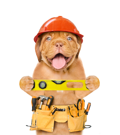 Handyman dog worker in hard hat with tool belt and spirit level. Isolated on white background.