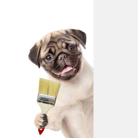 Funny dog with paint brush behind white banner. isolated on white background.