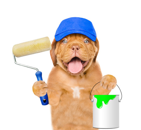 Funny dog in blue hat with paint roller and paint bucket. isolated on white background.