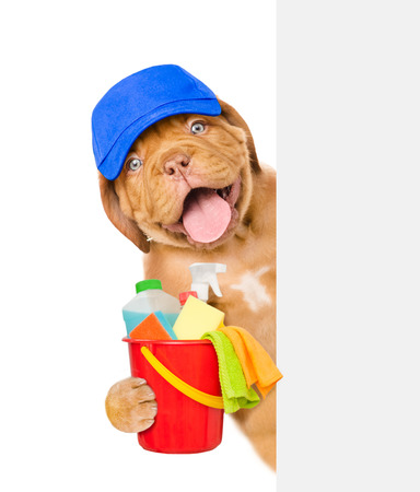 Concepto de limpieza Cachorro en el sombrero azul sobre la bandera blanca sostiene el cubo con fluidos de lavado y trapos en las patas. aislado en fondo blanco.