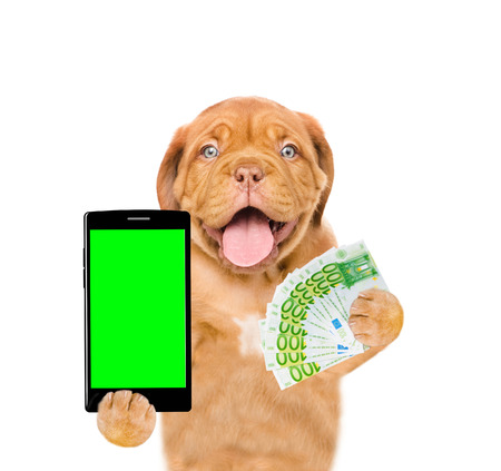 Funny puppy with smartphone and euro. Isolated on white background.