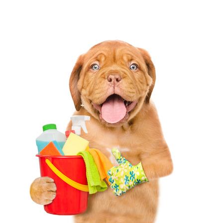 Concepto de limpieza El perrito sostiene el cubo con los líquidos que se lavan y los trapos en patas y mostrando los pulgares para arriba. aislado en fondo blanco.