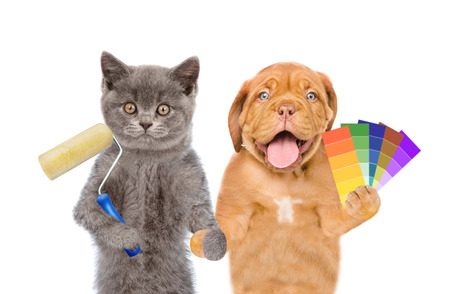 Funny puppy and kitten with  paint roller and color samples. isolated on white background.
