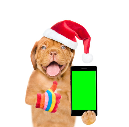 Funny puppy in red christmas hat with smartphone showing thumbs up. Isolated on white background.