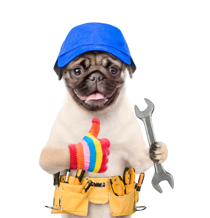 Funny dog worker in blue cap with tool belt and wrench showing thumbs up. Isolated on white background. Stock Photo