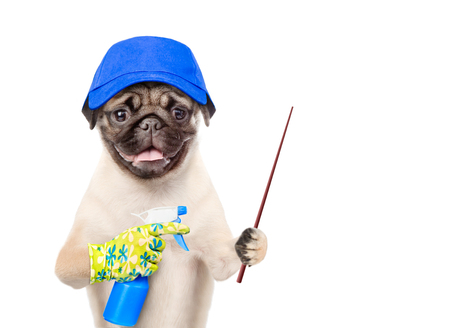 Funny puppy in blue hat with a spray in his paw pointing away. isolated on white background.