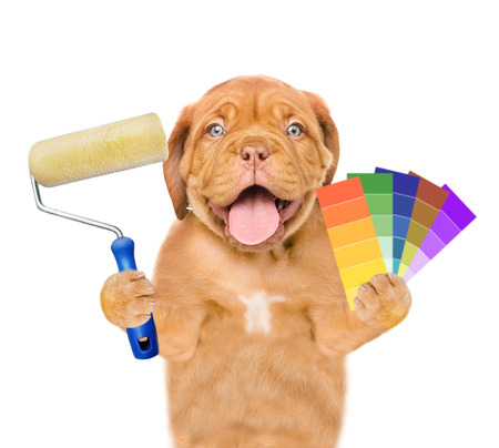 Funny puppy with color samples and paint roller. isolated on white background
