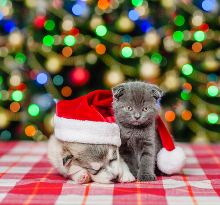 Kitten and sleeping puppy in red christmas hat on a background of the Christmas tree. Stock Photo