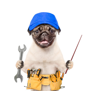 Funny dog worker  in blue cap with tool belt and wrench pointing away. Isolated on white background.