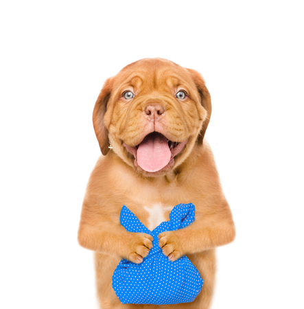 homeless puppy with a blu bag. isolated on white background. Stock Photo