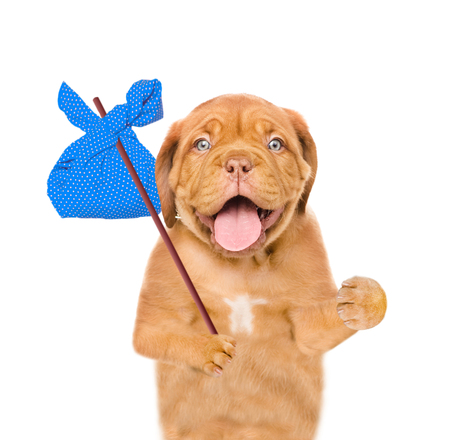 homeless puppy with a blu bag on a stick. isolated on white background. Stock Photo