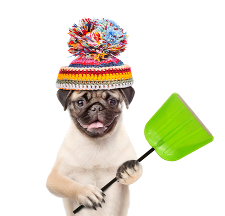 Funny dog  wearing a warm hat with pompon and holds a shovel. isolated on white background.