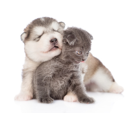 Playful puppy hugging a kitten.  isolated on white background.