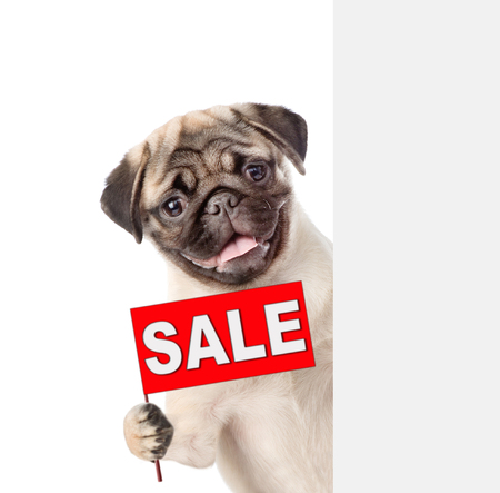 Dog with sales symbol above white banner. isolated on white background. Фото со стока