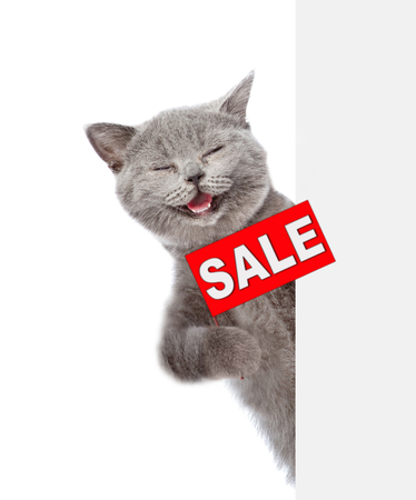 Happy cat  with sales symbol above white banner. isolated on white background.